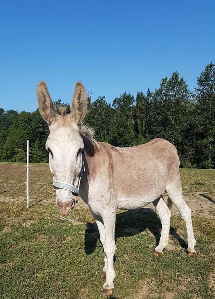 (02) POTIRON - ONC âne né en 2001 - A PARRAINER 2019_713