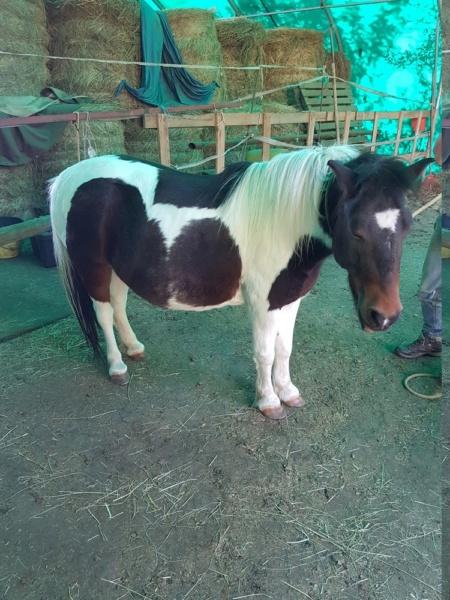 CANNELLE - ONC poney née en 2009 - adoptée en décembre 2013 par Catie - Page 4 2019_846