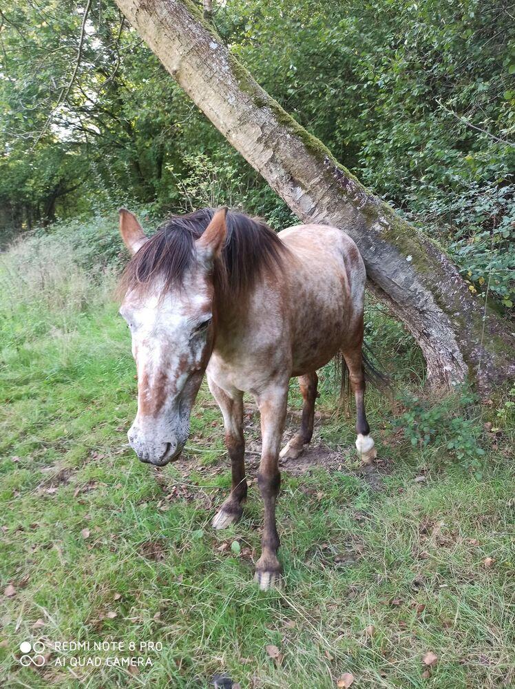 INDIANA - OI type poney née en 1994 - adoptée en juillet 2016 par Adeline - Page 2 20201068