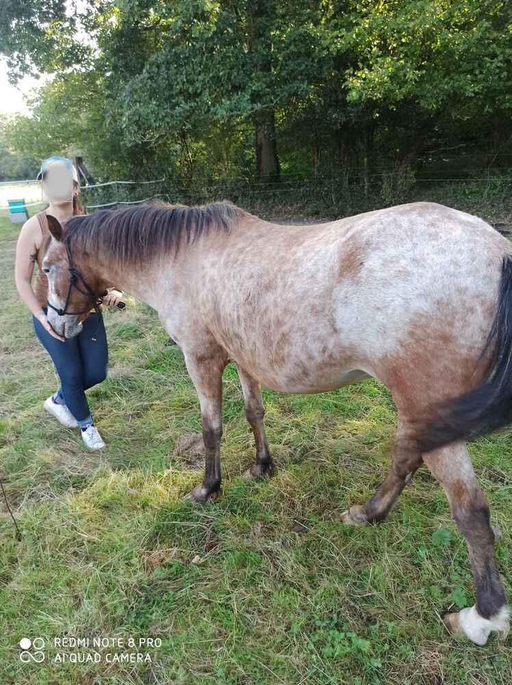 INDIANA - OI type poney née en 1994 - adoptée en juillet 2016 par Adeline - Page 2 20201069