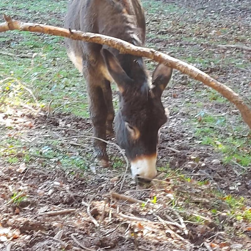 BOURRIFEE, renommée JOSETTE (dite PÉPÉTTE) - ONC âne née en 2010 - adoptée en août 2011 par Stephele12 - Page 3 20201294