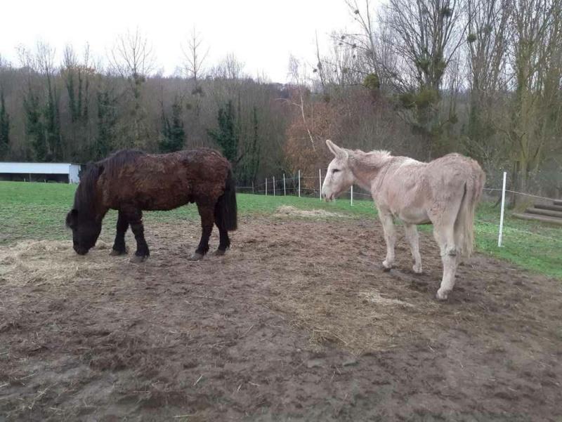 (02) ZEBULON - ONC poney né en 1997 - NON MONTABLE - A ADOPTER (126 € + don libre)   20201465