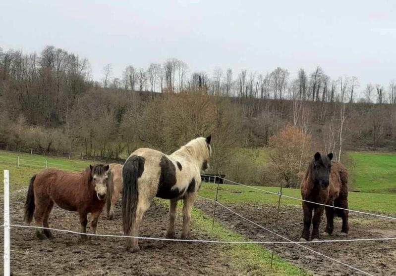 (02) ZEBULON - ONC poney né en 1997 - NON MONTABLE - A ADOPTER (126 € + don libre)   20201466