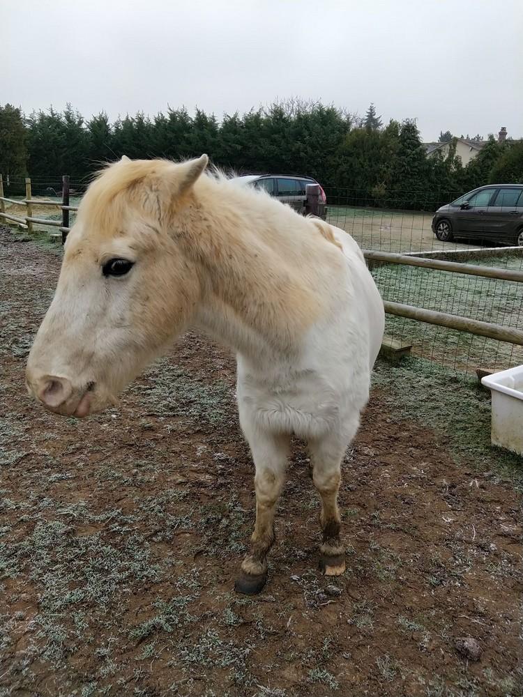 GRIBOUILLE - ONC poney né en 1994 - adopté en août 2009 par caro41 2020_110