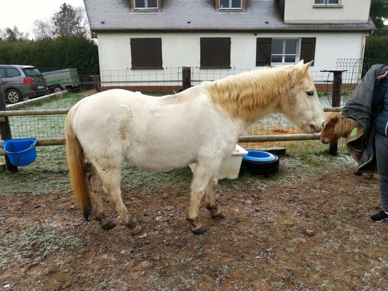 GRIBOUILLE - ONC poney né en 1994 - adopté en août 2009 par caro41 2020_111