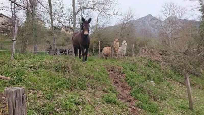 VIOLETTE dite PETALE - ONC Mule née en 2006 - adoptée en octobre 2012 par Jean 2020_335