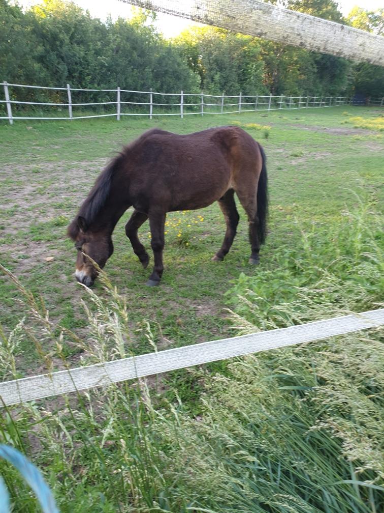 DAKAR - ONC poney né en 1998 - adopté en mars 2020 par Patricia 2020_403
