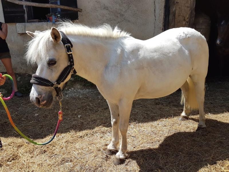 APACHE - ONC poney typé Shetland né en 1997- adopté en juillet 2015 par Claire 2020_843