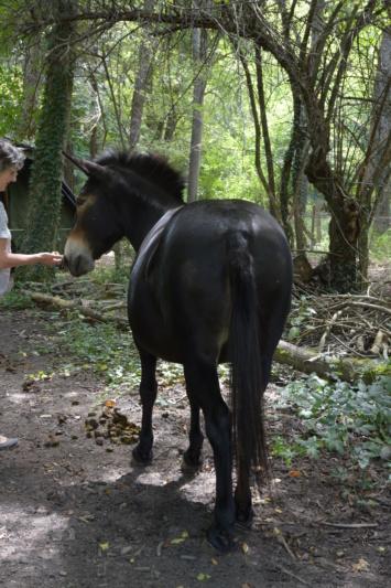 VIOLETTE dite PETALE - ONC Mule née en 2006 - adoptée en octobre 2012 par Jean 2020_952
