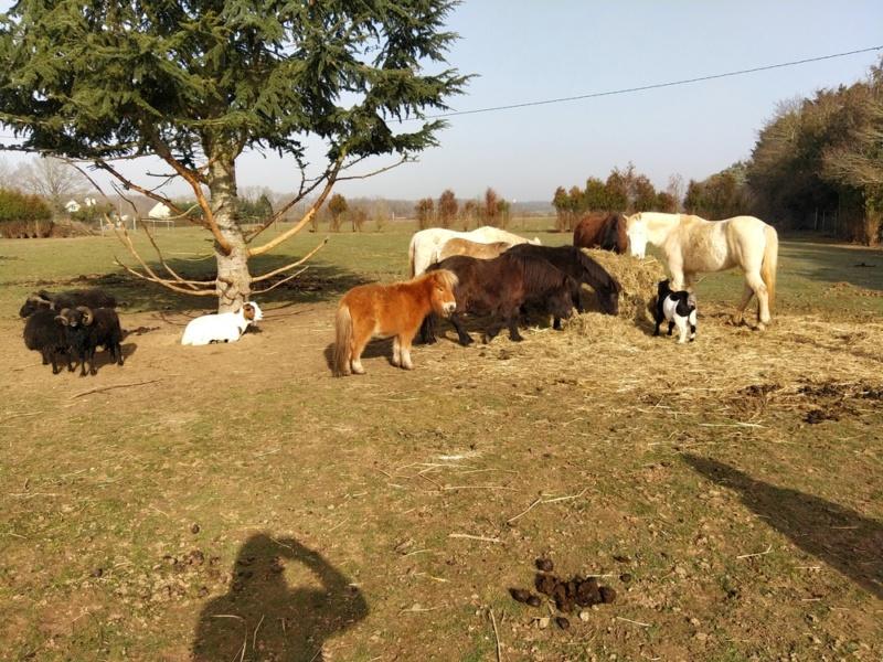 GRIBOUILLE - ONC poney né en 1994 - adopté en août 2009 par Carol Ann 2021-094