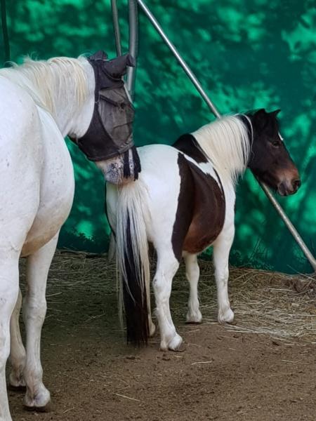 CANNELLE - ONC poney née en 2009 - adoptée en décembre 2013 par Catie - Page 3 2021