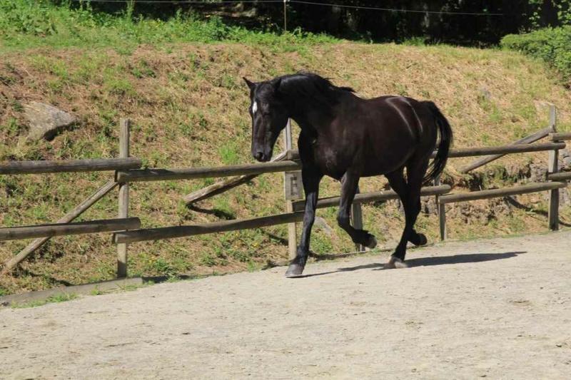 SAULE - TF né en 2006 - adopté en octobre 2013 par Olivier - Page 2 20211285