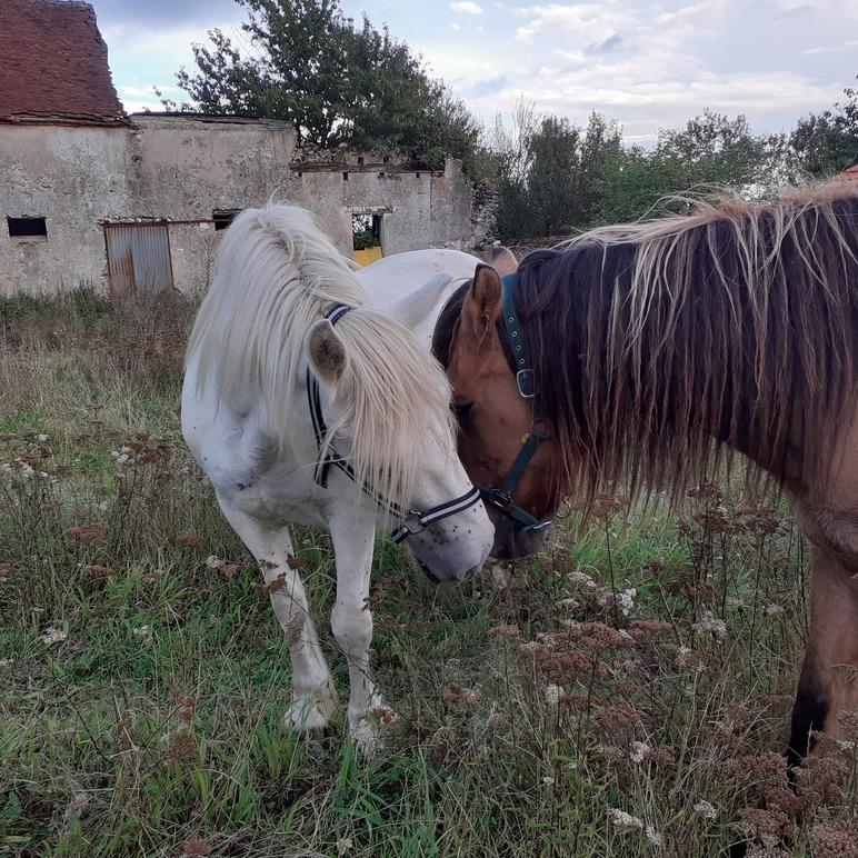 MISTIGRI - ONC Poney né en 2000 - adopté en septembre 2021 par Carole 20211345