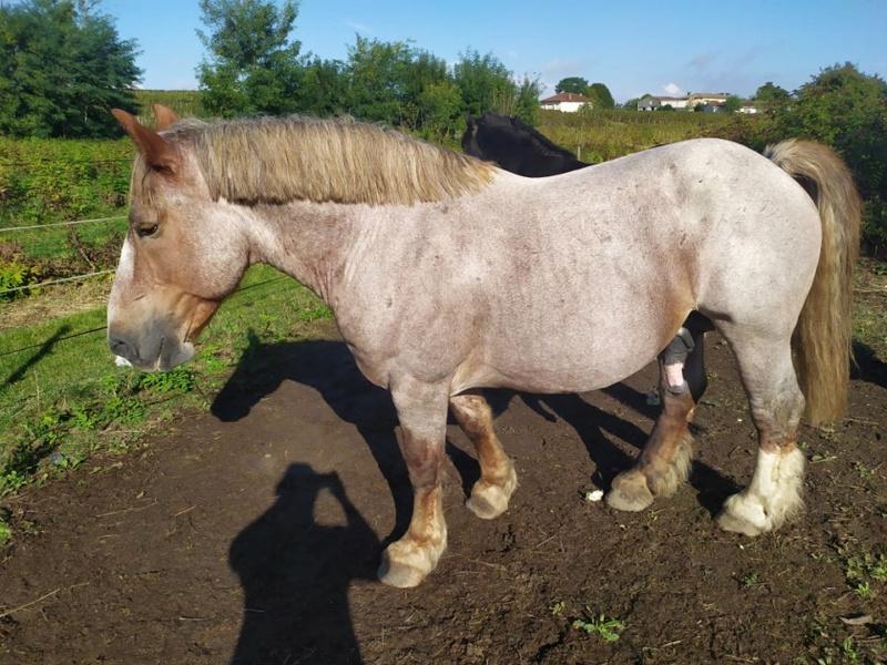 ULYSSE (Trait Breton) & UNIK (Breton X Percheron) nés en 2008 - adoptés en décembre 2008 par Fanny - Page 3 20211627