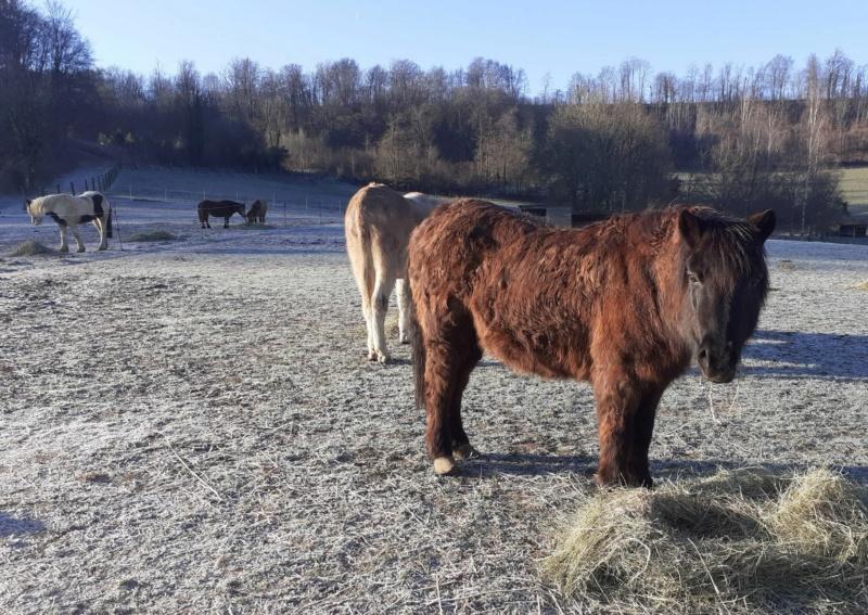 (02) ZEBULON - ONC poney né en 1997 - NON MONTABLE - A ADOPTER (126 € + don libre)   2021_094