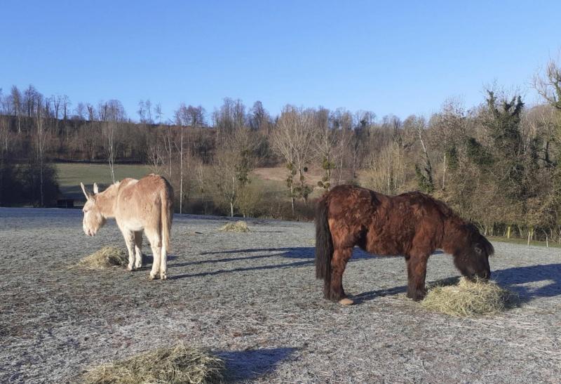 (02) ZEBULON - ONC poney né en 1997 - NON MONTABLE - A ADOPTER (126 € + don libre)   2021_097