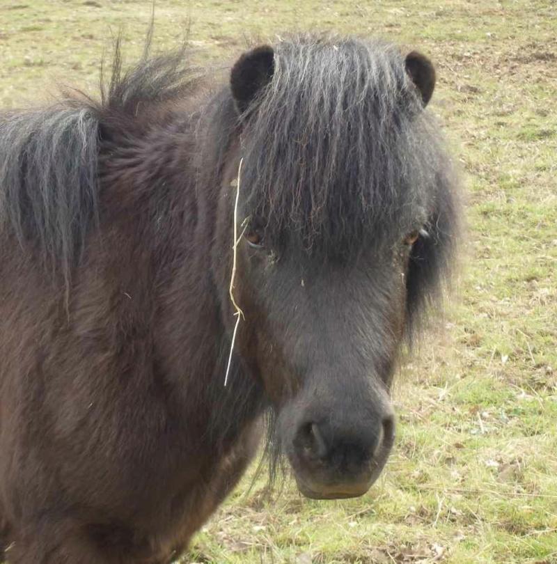 TEDDY - ONC Poney Typé Shetland né en 2007 - adopté en juillet 2021 par Ceed 2021_104