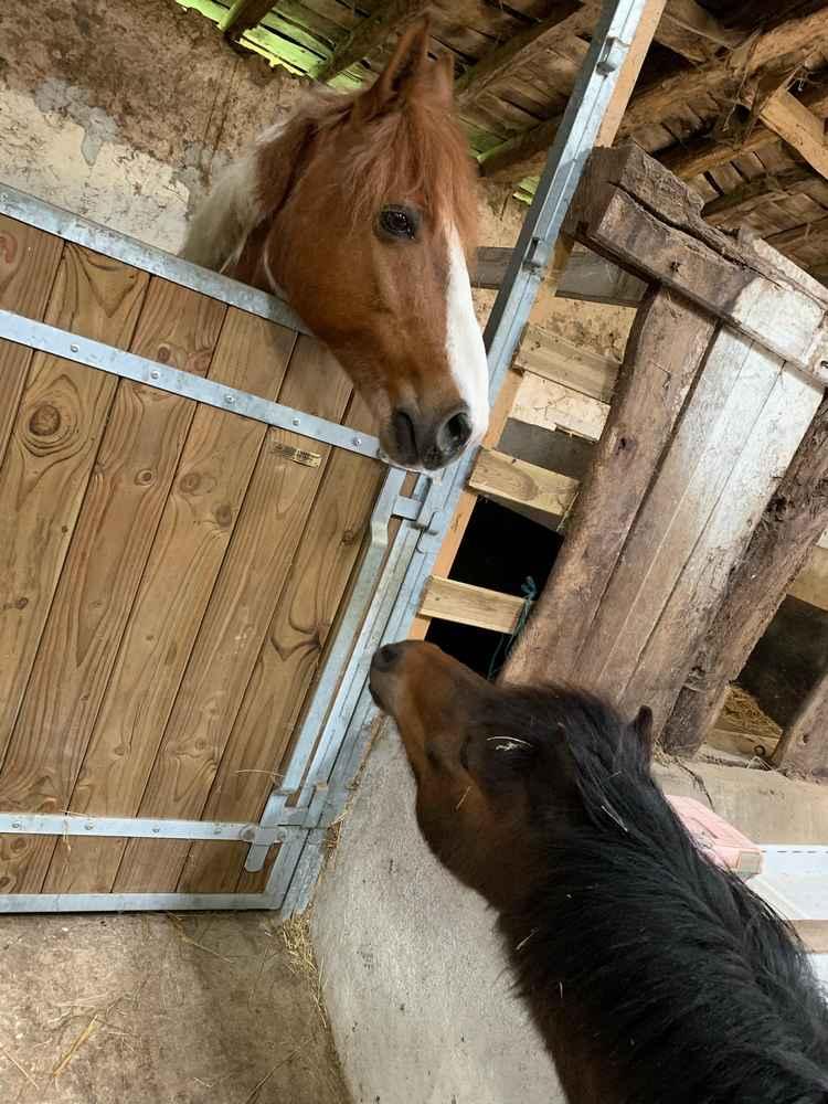 POM (pomm) - ONC poney né en 1998 - adopté en mai 2021 par Heidi 2021_394