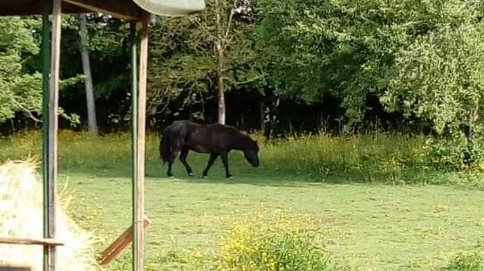 ZEBULON - ONC poney né en 1997 - adopté en mai 2021 par Marie-Christine 2021_448