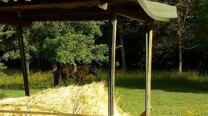 ZEBULON - ONC poney né en 1997 - adopté en mai 2021 par Marie-Christine 2021_449