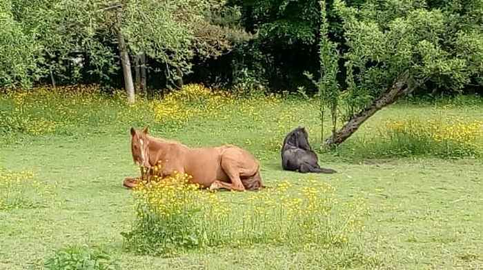 ZEBULON - ONC poney né en 1997 - adopté en mai 2021 par Marie-Christine 2021_450