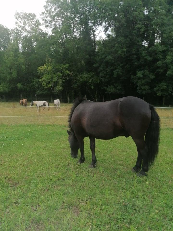 QUOQUIN - ONC poney né en 2004 - adopté  en  juillet 2021 par Maryon 2021_816
