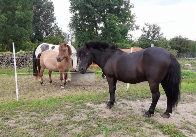 QUOQUIN - ONC poney né en 2004 - adopté  en  juillet 2021 par Maryon 2021_826