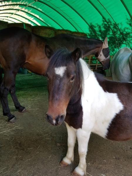 CANNELLE - ONC poney née en 2009 - adoptée en décembre 2013 par Catie - Page 3 2131