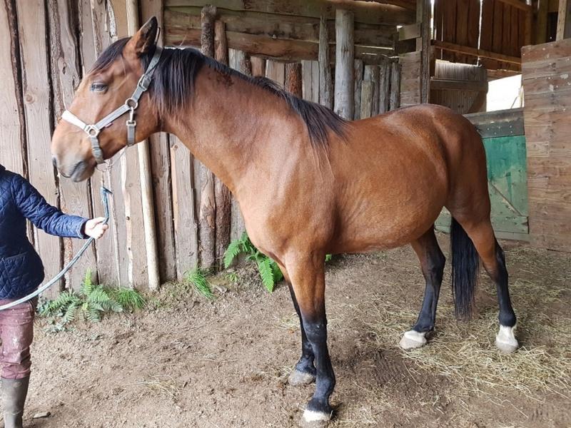 TOURNOI - TF né en 2007 - Adopté en janvier 2010 par Nathalie 2246
