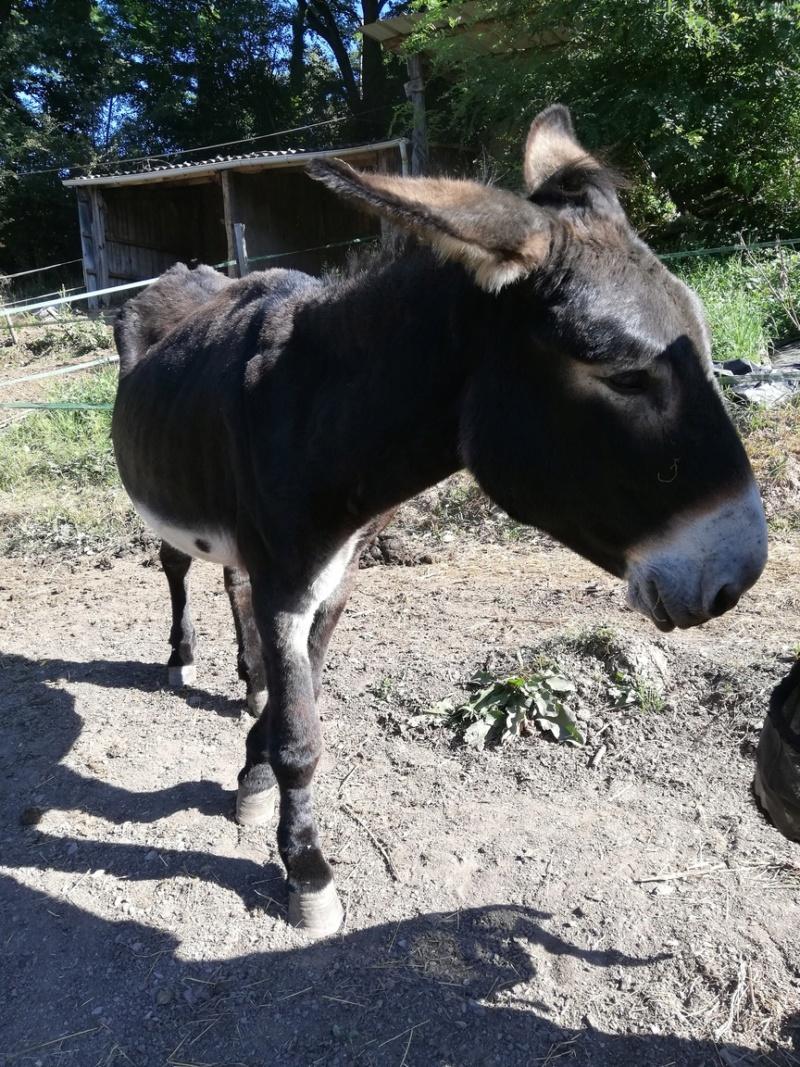 BOURRIFEE, renommée JOSETTE (dite PÉPÉTTE) - ONC âne née en 2010 - adoptée en août 2011 par Stephele12 - Page 3 5222