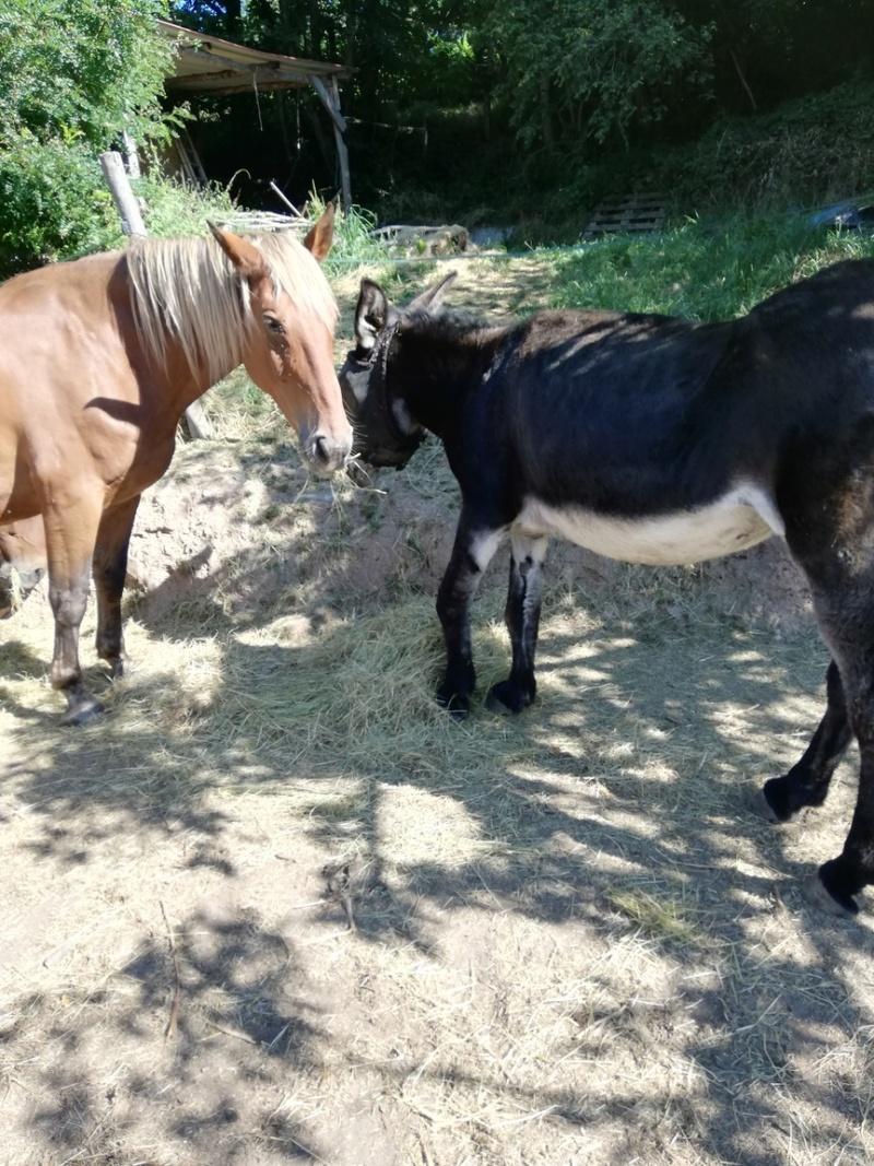 BOURRIFEE, renommée JOSETTE (dite PÉPÉTTE) - ONC âne née en 2010 - adoptée en août 2011 par Stephele12 - Page 3 5813