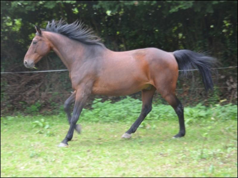 JUPITER ROYAL – Cheval de Selle né en 1997 – Adopté en mai 2020 par Annick 99_jup19