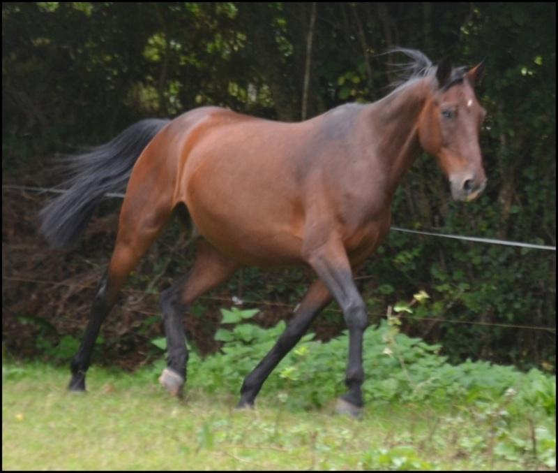 JUPITER ROYAL – Cheval de Selle né en 1997 – Adopté en mai 2020 par Annick 99_jup22
