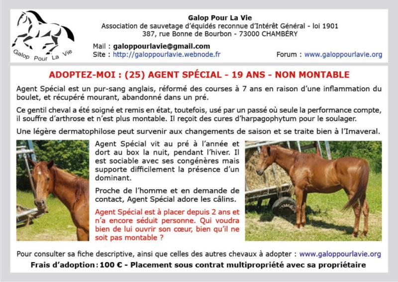 (25) AGENT SPÉCIAL dit Loulou – Hongre PS né en 2000 – non montable – 100 € + don libre à GPLV Agent_11
