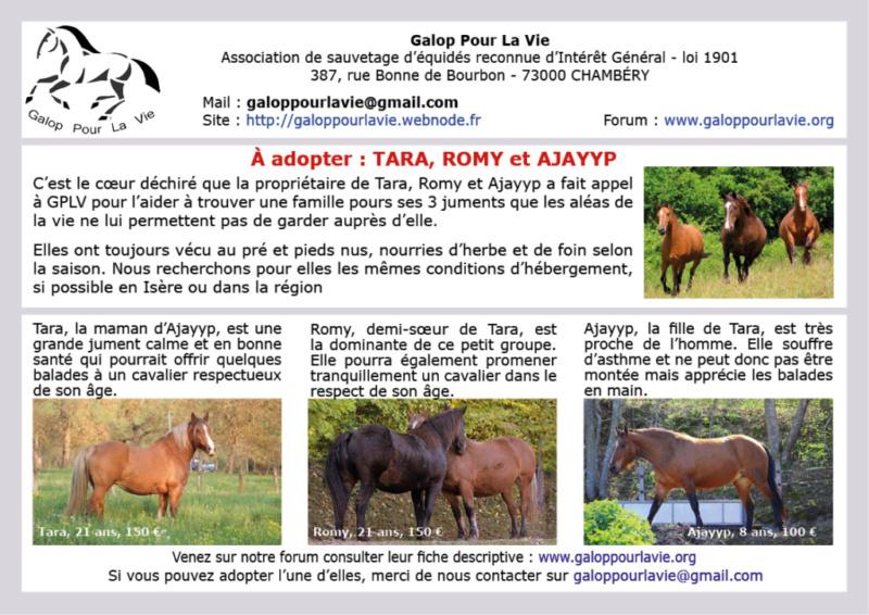 ROMY – ONC Trait née en 1997 – placée en direct par sa propriétaire Ajayyp14