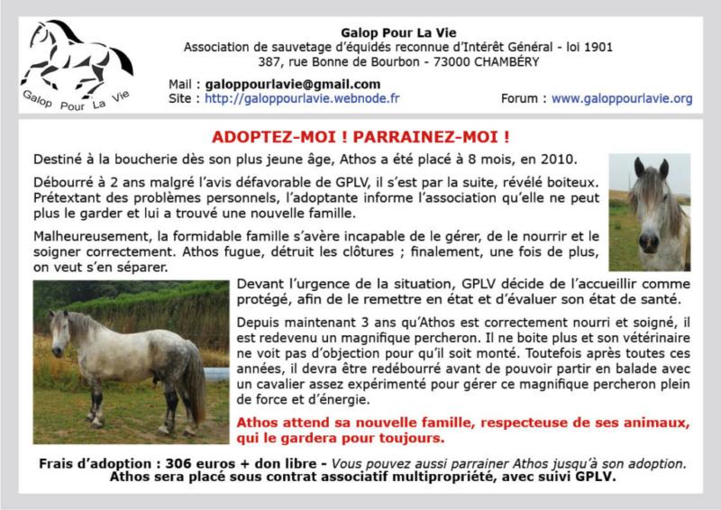 ATHOS - Trait Percheron né en 2010 - adopté en novembre 2019  par Lina  - Page 2 Athos_10