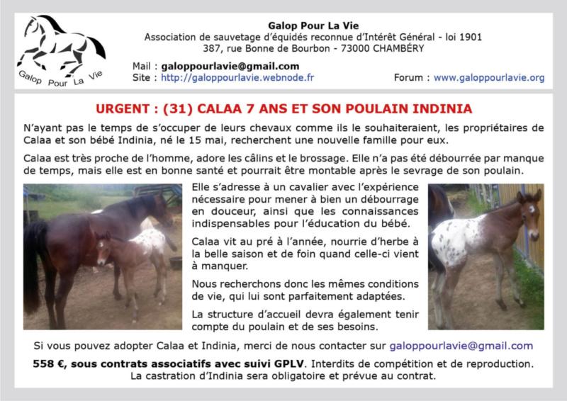 CALAA – OC Selle née en 2012 - suitée de INDINIA (mâle) –  vendus par leur propriétaire hors circuit associatif Calaa_10