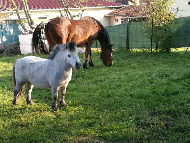 (80) CALINE – Jument ONC Poney née en 2012 – 100 € + don libre à GPLV Caline15