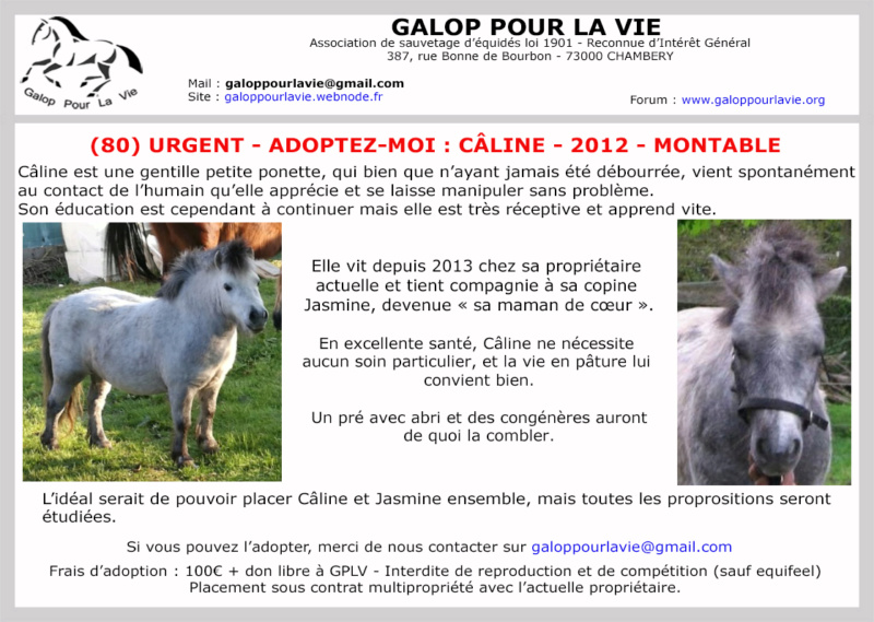 (80) CALINE – Jument ONC Poney née en 2012 – 100 € + don libre à GPLV Caline16