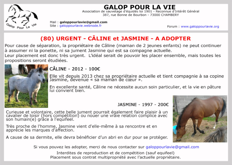 JASMINE  - ONC Selle née 1997 - adoptée en mars 2020 par Anne-Sophie Caline18