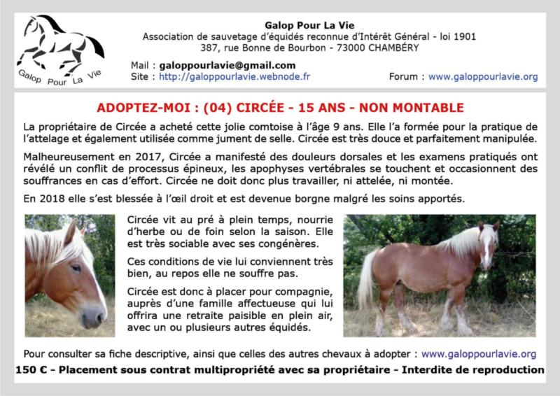 (04) CIRCÉE – Jument ONC Trait typée Comtoise - née en 2004 – Non montable – 150 € + don libre à GPLV Circzo11