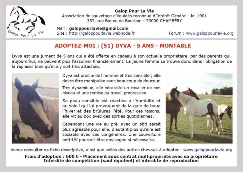 DYVA – ONC Selle née en 2013 – Placée par la propriétaire sans nous informer Dyva_111