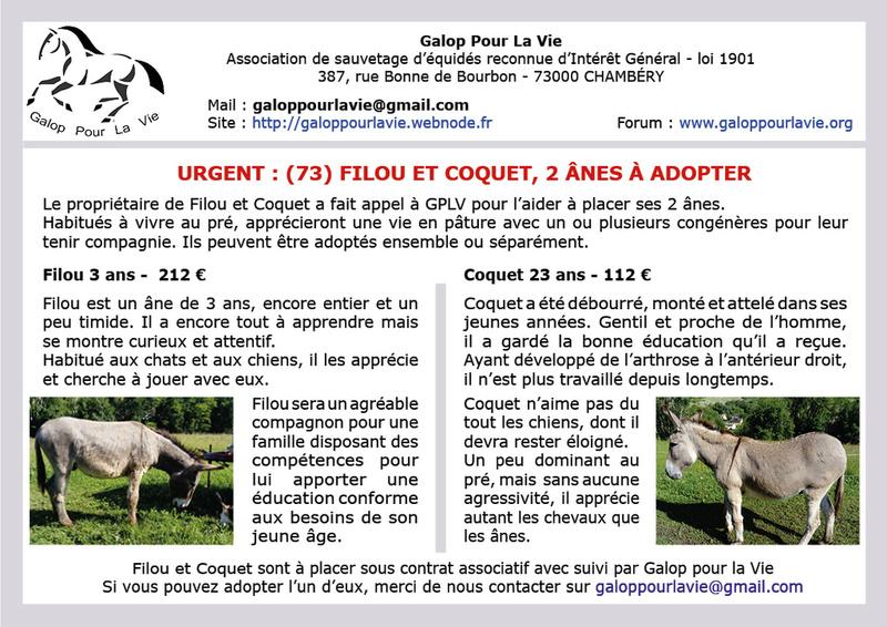 COQUET - ONC Âne né en 1995 - envoyé à l'abattoir par son propriétaire Filou_11