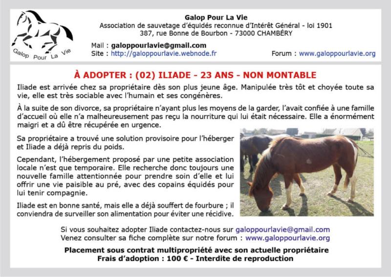 (02) ILIADE – Jument ONC SELLE née en 1996 – non montable – 100 € + don libre à GPLV Iliade11
