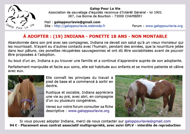 INDIANA - ONC Poney née en 2000 - adoptée en septembre 2018 par Alexandre Indian11