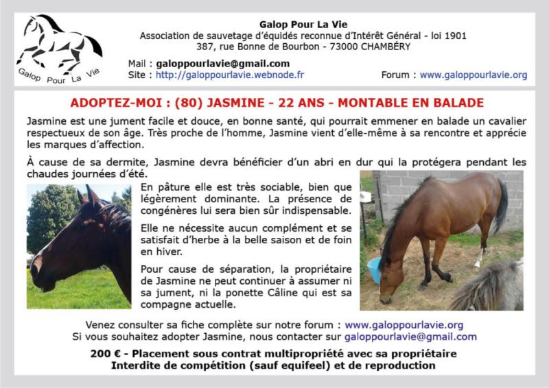 JASMINE  - ONC Selle née 1997 - adoptée en mars 2020 par Anne-Sophie Jasmin13