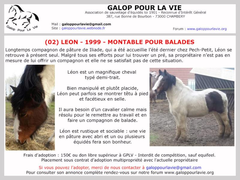 LEON – OI né en 1999 – adopté en mai 2020 par Muriel Leon_010