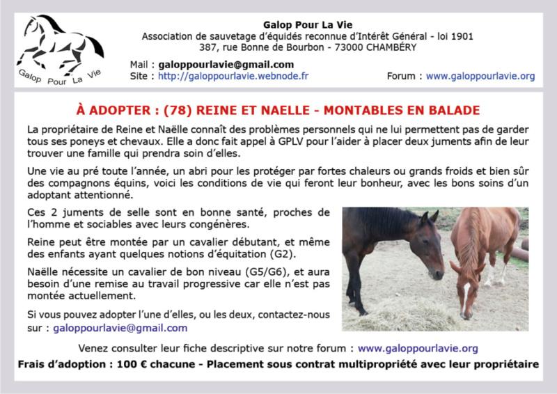 REINE – Jument ONC Selle née en 2000 – adoptée en mars 2019 par Capucine et Virginie Naelle13