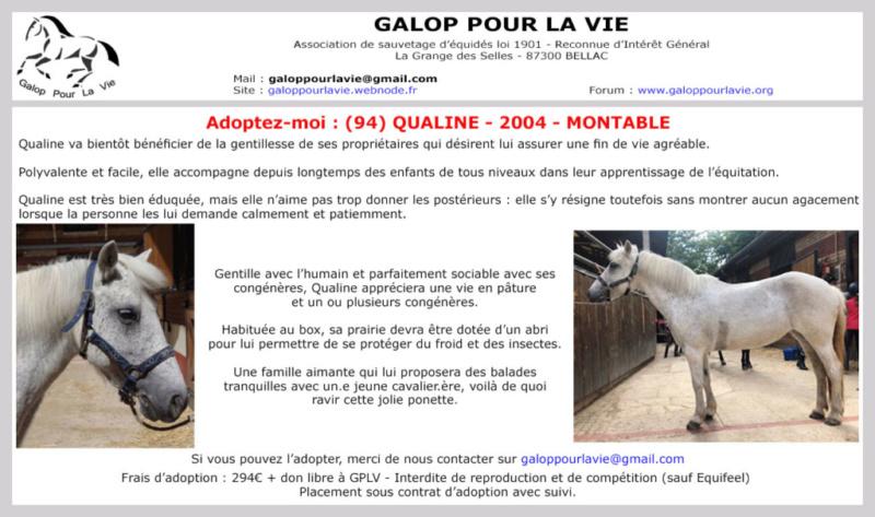 QUALINE - ONC Poney née en 2004 - adoptée en décembre 2020 par Céline Qualin10