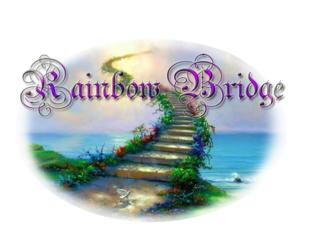 JADE - PP Percheron née en 1997 - adoptée en janvier 2013 par Helline 28 (ex Undicci) - Page 8 Rainbo10